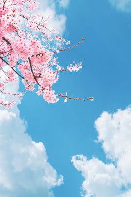 日本の空の背景 空 日本語 単純な 新鮮な さくら 文学 白い雲 風景 いいえ , 日本の空の背景, 空, 日本語 背景画像