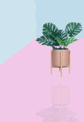 イン純赤シンプルな広告の背景 夏 サマードレス さわやか 鉢植えの植物 単純な 衣服 婦人服 化粧品 文学 しあわせ , 夏, サマードレス, さわやか 背景画像