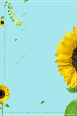 tiffany premium color creative sunflower summer poster tiffany blue segar warna maju musim , Matahari, Tiffany, Tiffany Premium Color Creative Sunflower Summer Poster imej latar belakang