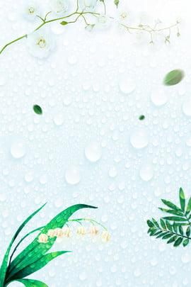 白露二十四太陽条件新鮮な緑の水滴ポスター 白い露 24ソーラーターム トラディショナル 習慣 文学 新鮮な グリーンプラント 水滴 , 白い露, 24ソーラーターム, トラディショナル 背景画像