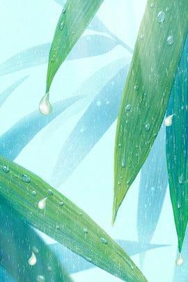 Fresh Willow Dew Hình Nền