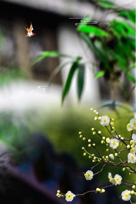 白露二十四太陽条件生花の葉ポスター 白い露 24ソーラーターム 伝統的なソーラー用語 習慣 文学 新鮮な 新鮮な 花 葉っぱ , 白露二十四太陽条件生花の葉ポスター, 白い露, 24ソーラーターム 背景画像