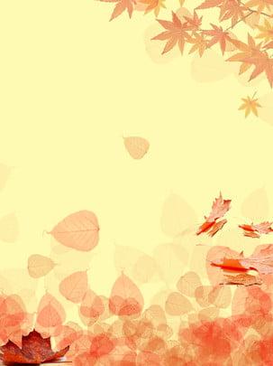 秋の紅葉カエデの葉の落ちる背景 , 紅葉, あき, カエデの葉 背景画像