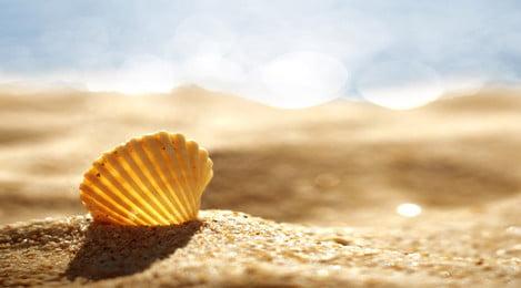 Đẹp mùa hè bãi biển nền chất liệu banner Vỏ Bãi biển Bãi biển Nền Hè Áp PSD Hình Nền