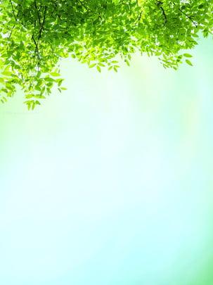 녹색 배경 광고 , 구유, 녹색 잎, 식물 배경 이미지