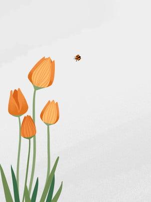 Illustration fresh flower hand painted tulip orange literary beautiful simple, Illustration, Background, Hand Painted Background image