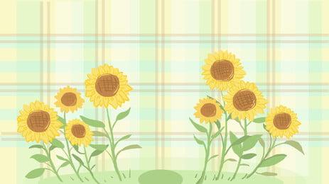 格子向日葵背景素材, 格子背景, 向日葵, 葵花 背景圖片