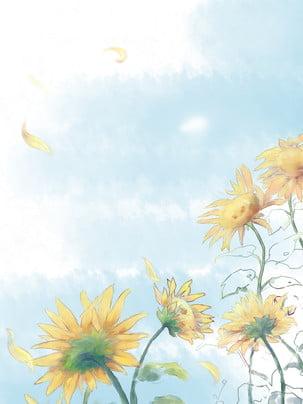 sơn nền hoa hướng dương , Hướng Dương, Hoa Xuân, Màu Xanh Ảnh nền