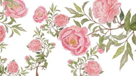 ピンクのバラの背景デザイン, ピンク, 植物の背景, バラの花の背景 背景画像