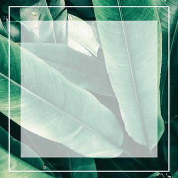 簡約葉子簡約風線框背景 , 簡約, 葉子, 線框 背景圖片