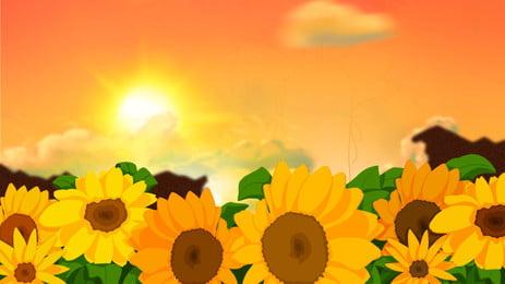 夕陽下的向日葵花海背景素材, 向日葵花海, 花海, 夕陽 背景圖片