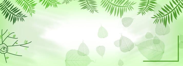 Fond darbre fond vert Couleur douce Arbre Vert La nature Feuilles Douce Arbre Vert Image De Fond