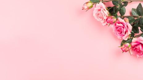 暖かいピンクのバラ、中国のバレンタインデーの背景素材 暖かい ピンク バラ 背景画像