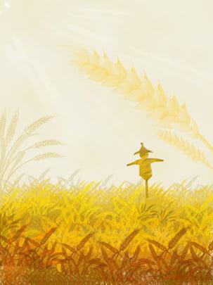 小麦畑秋の収穫の背景 , 麦畑, 小麦の穂, 収穫 背景画像