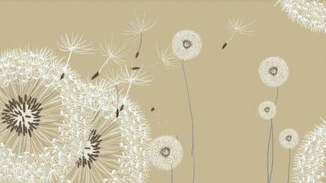सफेद सिंहपर्णी सुरुचिपूर्ण पृष्ठभूमि, सफेद, Dandelion, सादी जेन पृष्ठभूमि छवि