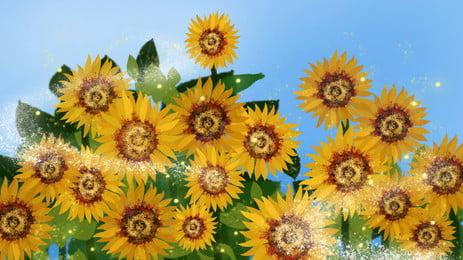 陽光下黃色的向日葵花背景元素, 陽光, 黃色, 葵花 背景圖片
