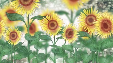 黃色向日葵植物清新背景, 黃色, 向日葵, 植物 背景圖片