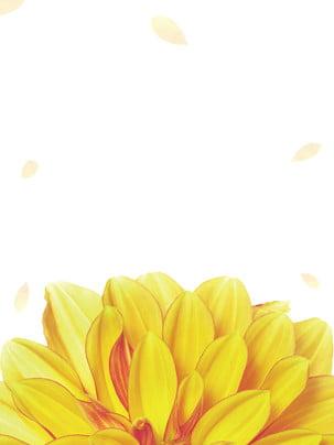 chongyang lễ hội hoa cúc vàng , Áp Phích Lễ Hội Chung Yeung, Chongyang, Lễ Hội đôi Ảnh nền