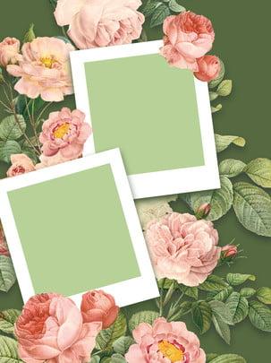 كامل خلفية الصورة زهرة الإطار , أزهر، أسس، أسس، خاص بالنبات، الخلفية.، إطار الصورة، الخلفية.، الزهرات، أيضا، النباتات صور الخلفية