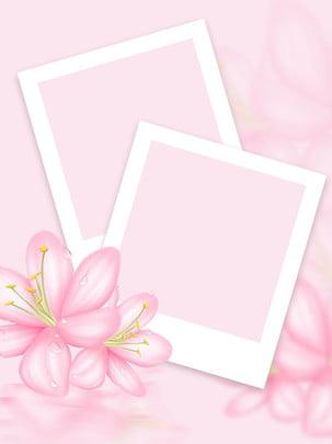 كامل زهرة النبات ورقة خلفية الصورة , الزهور, خلفية وردي, خلفية زهرة القرنفل صور الخلفية