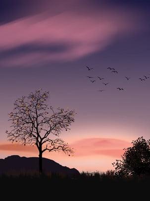 latar belakang langit hutan penuh , Kreatif, Matahari Terbenam, Langit imej latar belakang