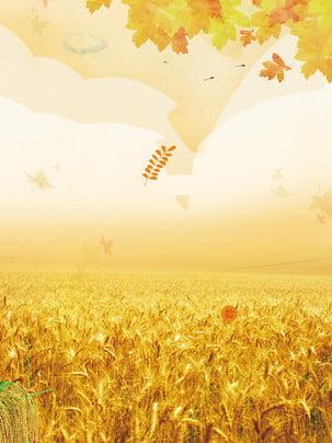 収穫シーズン小麦畑の背景素材 , 麦畑, カエデの葉, 落ち葉 背景画像