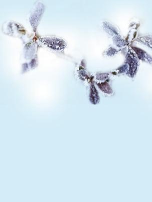 nền tuyết tuyết sương giáng , Về Mùa đông., Đóng Băng, Đại Hàn Ảnh nền