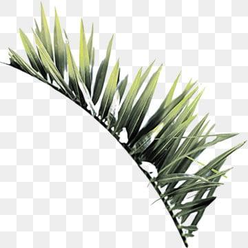 棕櫚葉熱帶 , 棕櫚, 葉, 熱帶 背景圖片