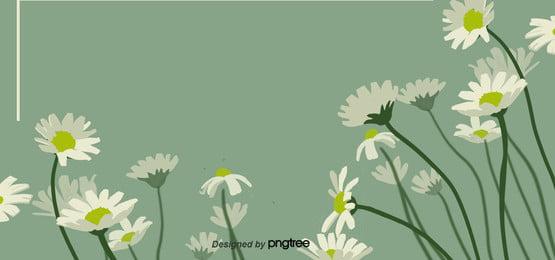 綠色雛菊春天花賀卡背景 , 促銷, 卡通, 可愛 背景圖片