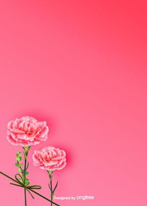 베이직한 핑크 포근한 카네이션 꽃 배경도 , 잎, 카네이션, 식물 배경 이미지