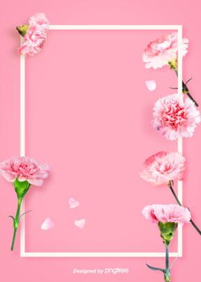 簡単な暖かい白い枠のカーネーションの花の背景図 , カーネーション, 暖かい, 白 背景画像