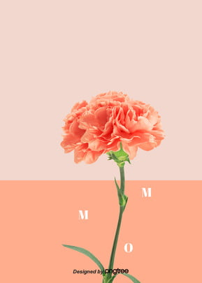 Background of Coral Carnation Mothers Day , Carnation, Mothers Day, Coral Color Background image