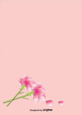 베이직한 핑크 카네이션 꽃 배경 , 카네이션, 아늑하다, 간략하다 배경 이미지