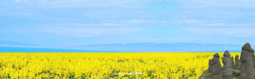 상큼한 제주도 봄 유채꽃 배경도 , 하늘, 작고 풋풋하다, 여행하다 배경 이미지