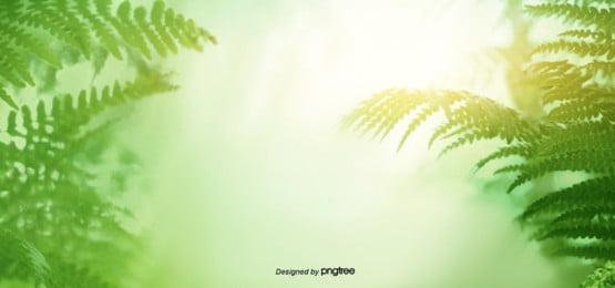 sunlit forest background , A Luz, O Sol De Verão, Dim Imagem de fundo