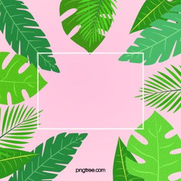 夏日棕櫚葉簡約粉色背景 , 夏日, 棕櫚葉, 簡約 背景圖片