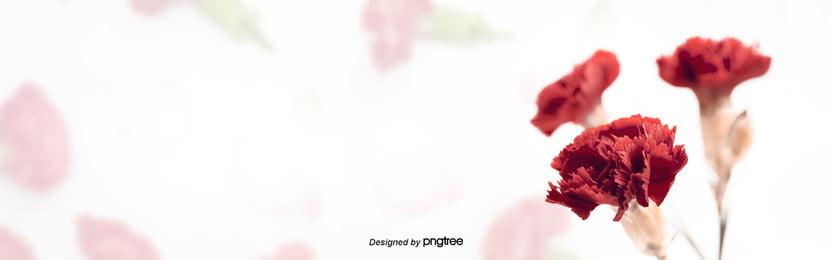 紅色花朵植物花瓣, 植物, 紅色, 背景 背景圖片
