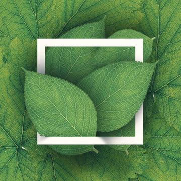 daun hijau musim panas tropika dedaunan latar belakang , Latar Belakang, Botani, Kad imej latar belakang