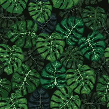 monstera tropical leaf seamless , Pattern, Jungle, Background Background image