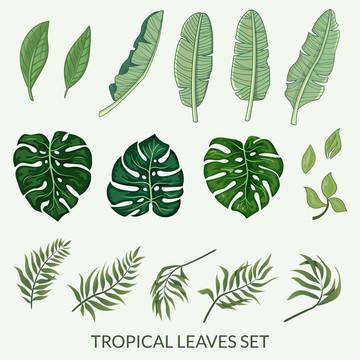 folhas tropicais definidas vector , Arte, Fundo, Banana Imagem de fundo