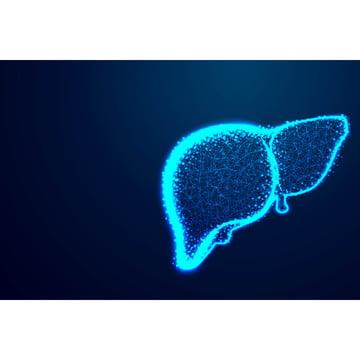 coração linhas de anatomia humana e triângulos o fígado ponto con , 3d, Abstract, Anatomia Imagem de fundo