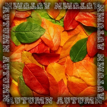 उज्ज्वल शरद ऋतु एक पैच में निकलती है , शरद ऋतु, गिरावट, मौसम पृष्ठभूमि छवि