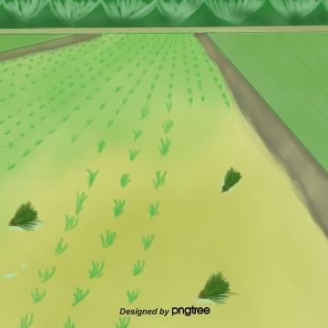 ग्रीष्मकालीन चावल का मैदान  हरा मैदान , गर्मियों में, धान, ग्रीन पृष्ठभूमि छवि