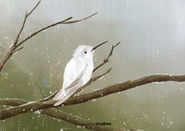 cành cây  chim  thú  mưa, Cây, Cành Cây., Birdie Ảnh nền