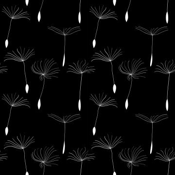 hạt bồ công anh trắng trên nền đen , Taraxacum, Mùa Hè., Hoa Ảnh nền