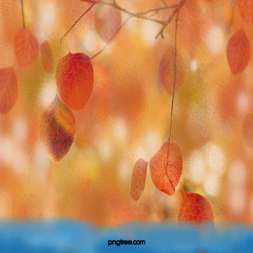 秋天的黃色枯葉 , 葉, 枯萎和黃色, 秋天 背景圖片