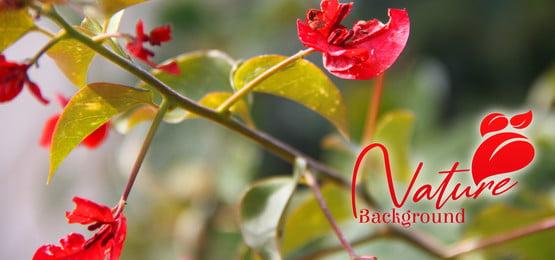 fundo de natureza verde e flor, Fundo, Abstract, A Natureza Imagem de fundo