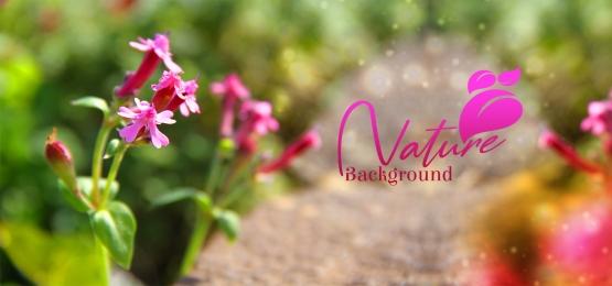 flor rosa macro abstrato, Flor, Fundo, Macro Imagem de fundo