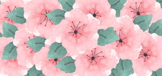 fundo de flor de hibisco aquarela em rosa, Rose, Tulipa, Hibiscus Imagem de fundo
