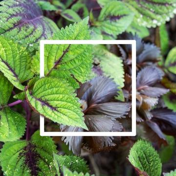 सफेद लेआउट के साथ रचनात्मक लेआउट हरी पत्तियां चौकोर फ्रेम , सार, पृष्ठभूमि, सुंदर पृष्ठभूमि छवि